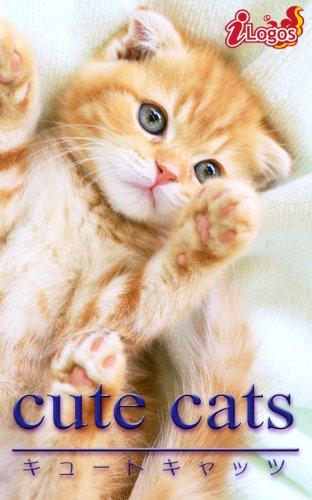 cute cats02 スコティッシュ・フォールド