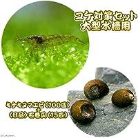 charm(チャーム) (エビ・貝)コケ対策セット 大型水槽用 ミナミヌマエビ(100匹)+(B品)石巻貝(15匹) 【生体】