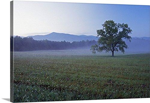 """キャンバス上需要プレミアムシックラップキャンバス壁アート印刷題名Singleツリーin Green Pasture at Cades Cove、Distant Smoky Mountains inミスト、Smoky Mountains国立公園、テネシー州 48"""" x 32"""" 102158_24_48x32_none"""