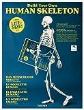 Build Your Own Human Skeleton - Life-size!