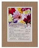 Chikuma フォトフレーム プルーラルマット 2L ホワイト+レッド 15916-2