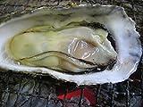 こだわりの殻付き1年牡蠣 (兵庫県相生産)  こだわりの牡蠣工房ふくえい (2kg)