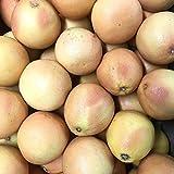 グレープフルーツ ルビー 約5kg (15玉)柑橘 みかん レッドグレープフルーツ 果物 フルーツ まとめ買い 家庭用 業務用 飲食店