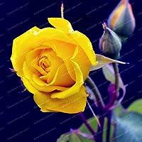 25色珍しいバラの花の種子diyガーデンSupplieホームガーデン多年生植物の花美しい盆栽植物50個