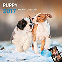 LittleGifts Puppies 2017 Calendar (3063) [並行輸入品]
