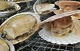 海鮮バーベキューCセット(ホタテから付きM4個、あわび50g4個、はまぐり2L4個、がんす1パック、おまけのレモスコ小袋8個)