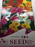 【 珍種子】 海外のネメシア MIX色入 (30粒入)