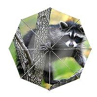 傘 ワンタッチ 自動開閉 折りたたみ傘 レディース傘 高強度 グラスファイバー 雨傘 日傘 耐強風 晴雨兼用傘 オシャレなストライプ模様 軽量アライグマベイビー 8本骨 耐風撥水 UVカット 加工済み 完全遮光 紫外線遮蔽率99%