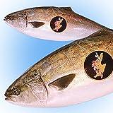 魚水島 天然 寒ブリ「佐渡 寒ぶり」4kg以上5kg未満 一尾丸もの