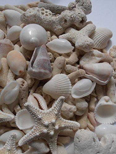 ミニヒトデ、白いサンゴ色々な貝殻セット ナチュラルインテリアハワイ 手作り素材
