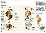 大人のフィールド図鑑 原寸で楽しむ 美しい貝 図鑑&採集ガイド 画像