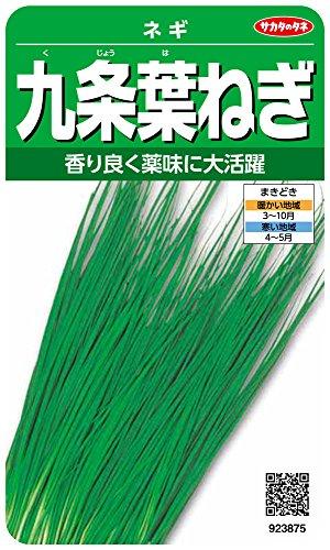 サカタのタネ 実咲野菜3875 九条葉ねぎ ネギ 00923875