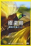 ナショナル ジオグラフィック 極楽鳥 魅惑の求愛ダンス [DVD]