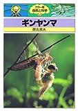 ギンヤンマ (カラー版自然と科学 (46))