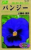 カネコ種苗 草花タネ125 パンジー 大輪咲き 紫花 10袋セット