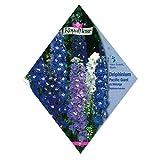 [花タネ][フランス花の種]デルフィニウム パシフィックジャイアント ミックス 1袋 ノーブランド品