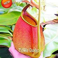 ベストセラー!Nepenthesの種子の花とハーブの肉食性の植物が空気を捕まえる昆虫50個/パック、#3Goywt
