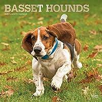 Basset Hounds 2020 Calendar: Foil Stamped Cover