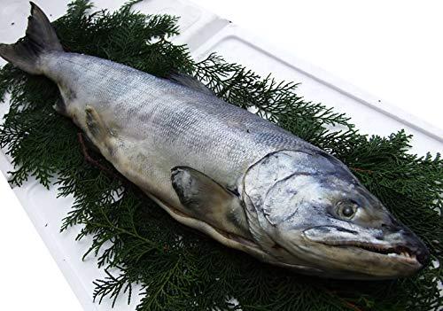 北海道産【新巻鮭】姿1匹(1.4kg前後)化粧箱入り[冷凍]【未カット品・調理前にカットが必要です】白鮭シロザケ・秋鮭・新巻き鮭サケ 昔なつかしい味!