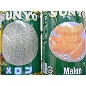 サンヨーフルーツ缶詰メロン6缶入り