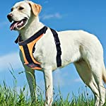 Seacue Dog Harness No Pull Adjustable Pet Oxford Soft Vest for Small Medium Large Dogs Easy Control Harness (Medium, Orange)