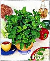 SEEDSは:緑野菜鉢植えペッパーチック工場約200個の土壌は、バブルバッグリトルガーデン盆栽家の庭に植え:11