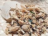 天然素材 ホタテ1P/コブヒトデ2P/さざれシェル(貝殻チップ)白巻貝6P 300g 貝殻セット