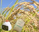 訳あり 新潟県産 中米 白米 生活応援 訳あり米 10キロ 平成28年産
