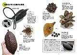 草木の種子と果実―形態や大きさが一目でわかる植物の種子と果実632種 (ネイチャーウォッチングガイドブック) 画像