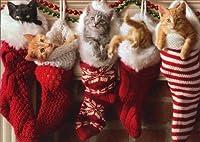 Kittens inクリスマスストッキング–Avanti猫クリスマスカード