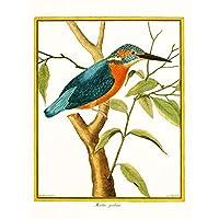 Bird Common Kingfisher Martin Pecheur Unframed Art Print Poster Wall Decor 12x16 inch 鳥キングポスター壁デコ