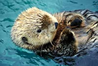 Sea Otter Up Close 16 x 24 Giclee Print LANT-47449-16x24