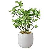 DORIS 人工観葉植物 光触媒 簡単世話いらず 水やり不要 フェイクグリーン ヒポエステス