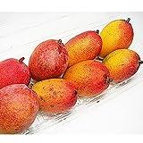 沖縄県産 アップルマンゴー 規格外ミニ (約2-10玉) 約500g 家庭用 お試し (7月頃)