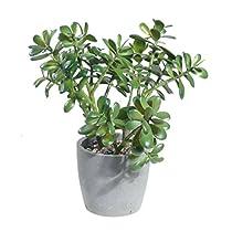 """ゴールドイーグルUSA Jade人工植物withセメントRockポット、15"""" x 17インチ、グリーン"""