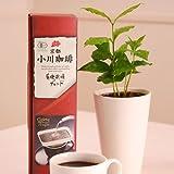 【送料無料】小川珈琲とコーヒーの木のセット【父の日ギフトお届け6/18〜6/20】