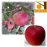リンゴ2種セット:ふじ(富士)と紅玉(こうぎょく)[受粉セット][苗木] ノーブランド品