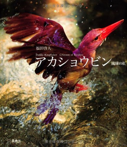アカショウビン―琉球の紅Ruddy Kingfisher Crimson of Ryukyu