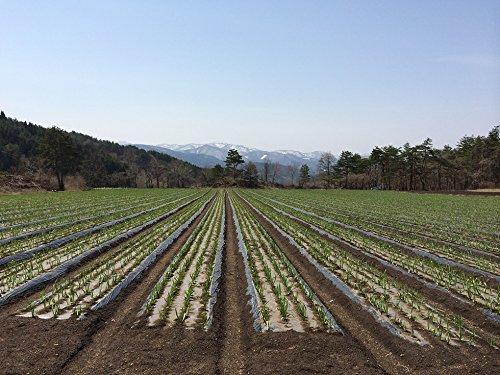 『青森県産 黒にんにく 熟 バラ 1キロ 無選別』の3枚目の画像