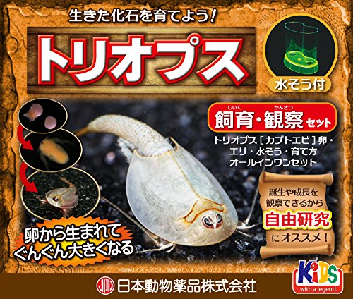 ニチドウ トリオプス飼育観察セット