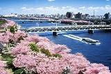2542ピース ジグソーパズル パズルの超達人EX 春 隅田川沿いの桜並木  東京 スーパースモールピース(50x75cm)