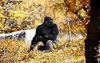 猿猿ゴリラ Monkey Ape Gorilla Painting silk fabric poster シルクファブリックポスター 53cm x 33cm