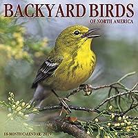Backyard Birds of North America 2019 Calendar