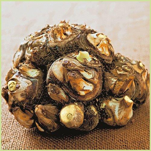 里芋 八つ頭の種芋(1kg)