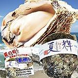 天然岩牡蠣 (活) 夏輝牡蠣 350g-450g前後 ブランド 夏輝牡蠣 鳥取産 カキ 刺身用