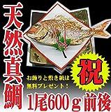 祝い鯛600g お食い初め 焼き鯛 敷紙 飾り付き 天然