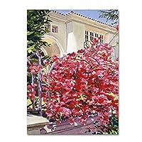 商標Fineアートdlg0325-c1419ggピンクBougainvillea Mansion by David Lloyd Glover壁装飾 18x24 DLG0325-C1824GG