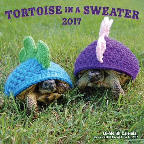 Tortoise in a Sweater 2017: 16-Month Calendar September 2016 through December 2017 (Calendars 2017)