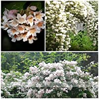 種子パッケージではありません植物:個/ロット豚花BeautyUniqueそして美しい花の種C