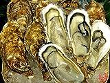 刺身用 北海道産プレミア牡蠣 生食用カキ大サイズ10個入 (1パック)
